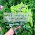 Zdrowa zielenina