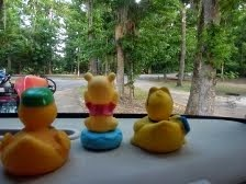 The Duckie View