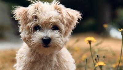 un perrito que te está mirando  mira