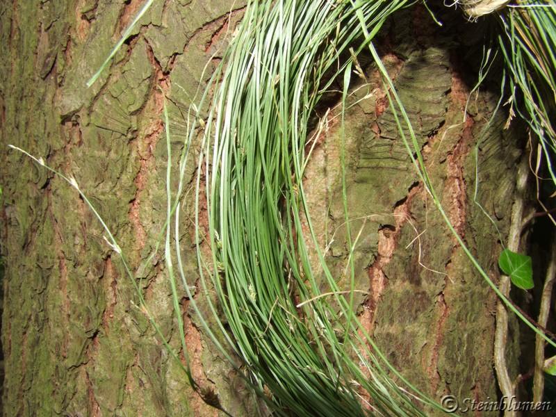Kranz aus gräsern
