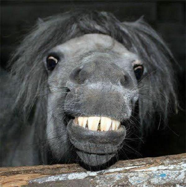 Kuda senyum