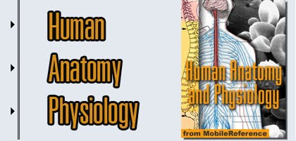 anatomy1