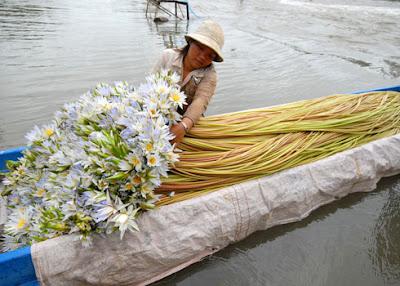 Cô gái trẻ Nguyễn Thị Tươi ở Tịnh Biên hàng ngày bơi xuồng qua khu vực gần biên giới Campuchia hái bông súng để kiếm tiền phụ giúp gia đình. Chiều về bông súng được tập kết tại chợ Châu Đốc để đem đi tiêu thụ khắp nơi đồng bằng sông Cửu Long.