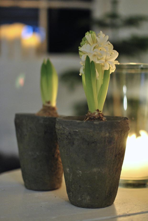 hannashantverk.blogspot.se vita hyacinter grå krukor