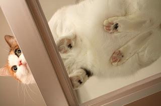 Kucing paling imut
