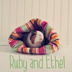 My Guinea Pig Shop on Etsy