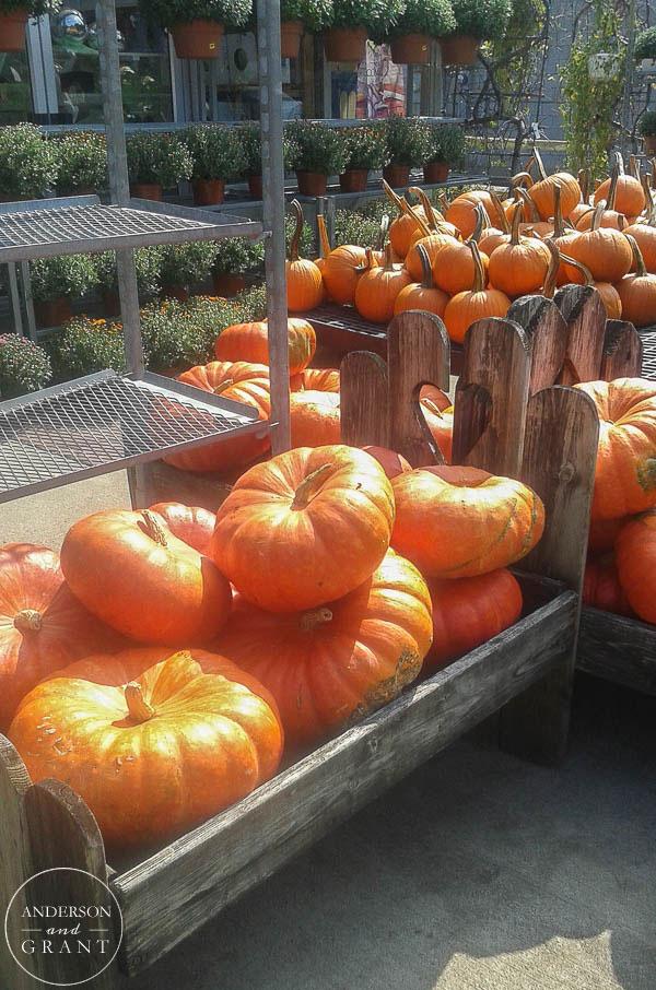 Orange Pumpkins piled at Farm Market