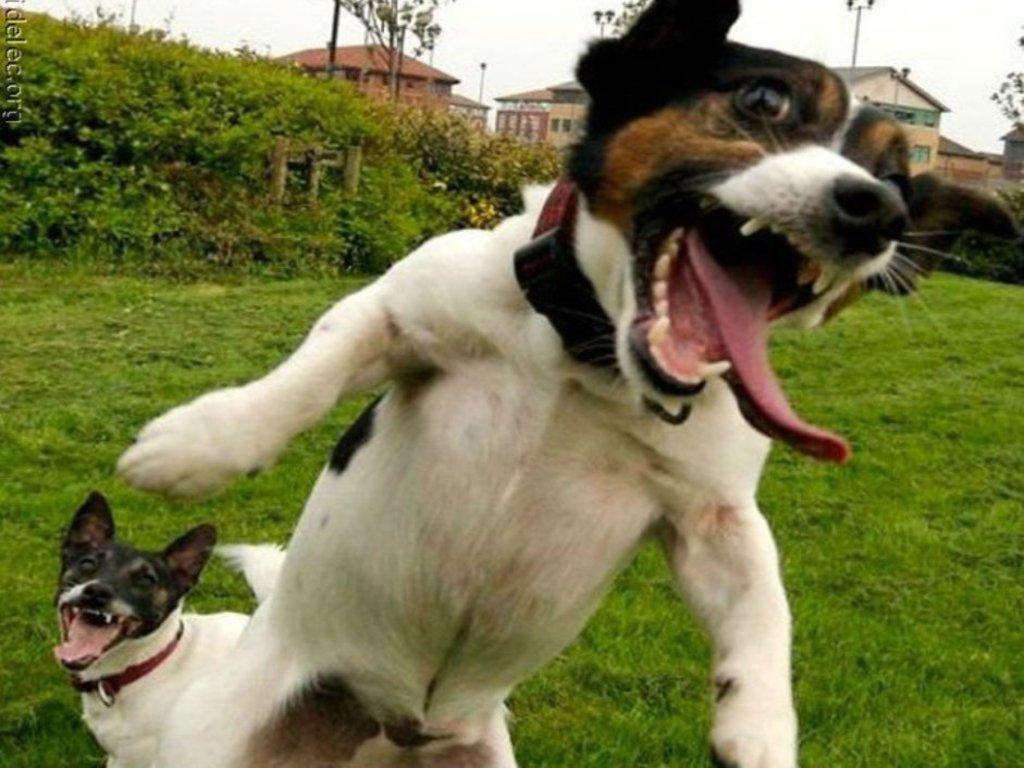 fotos divertidas de animales y imagenes graciosas