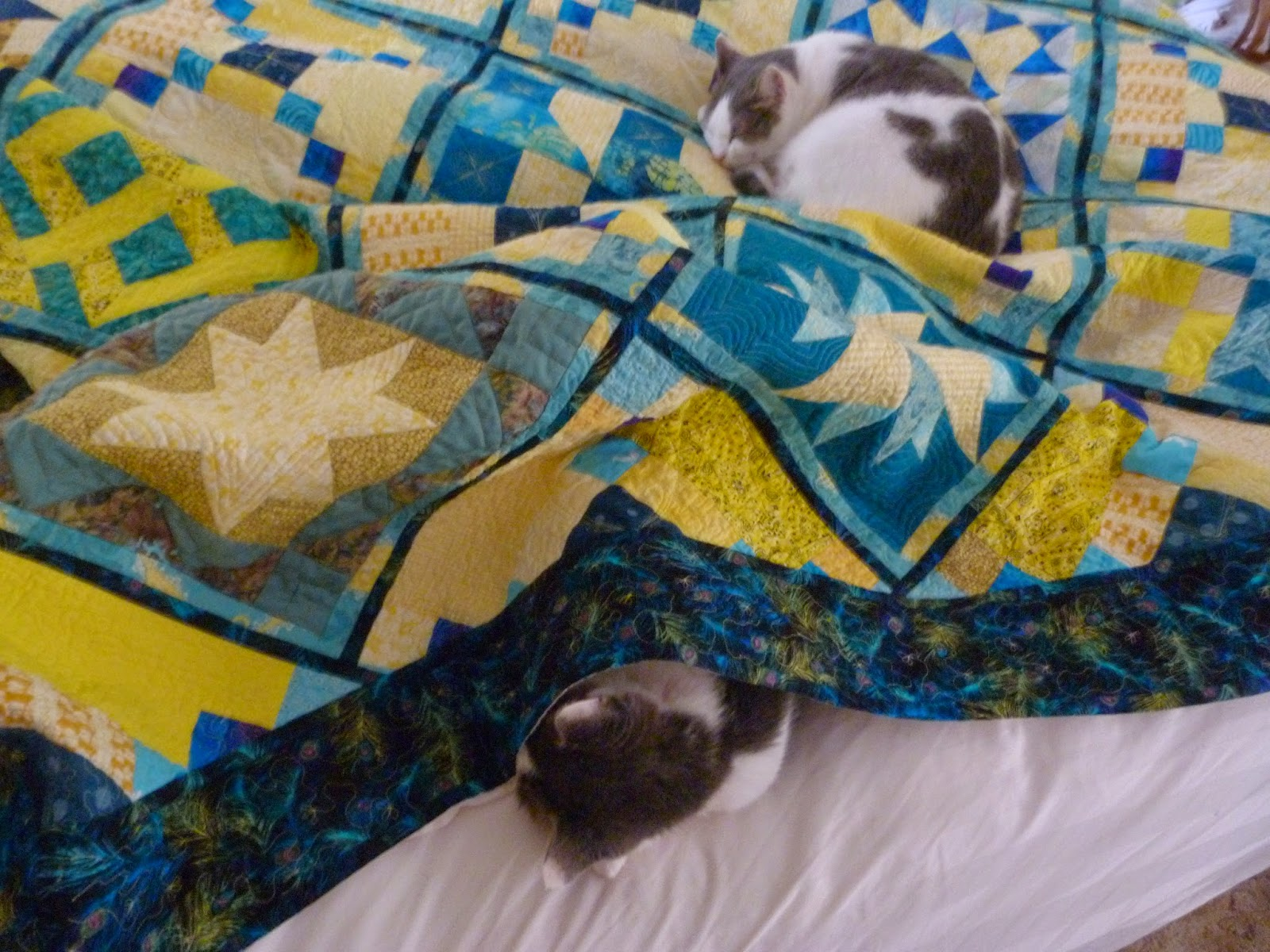 CHQuilts: Ryan and Kasey snooze