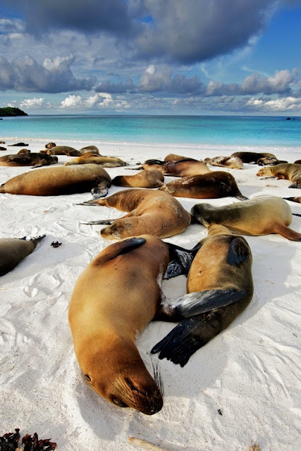 Galapagos Island / See and Savor w/Jade Broadus