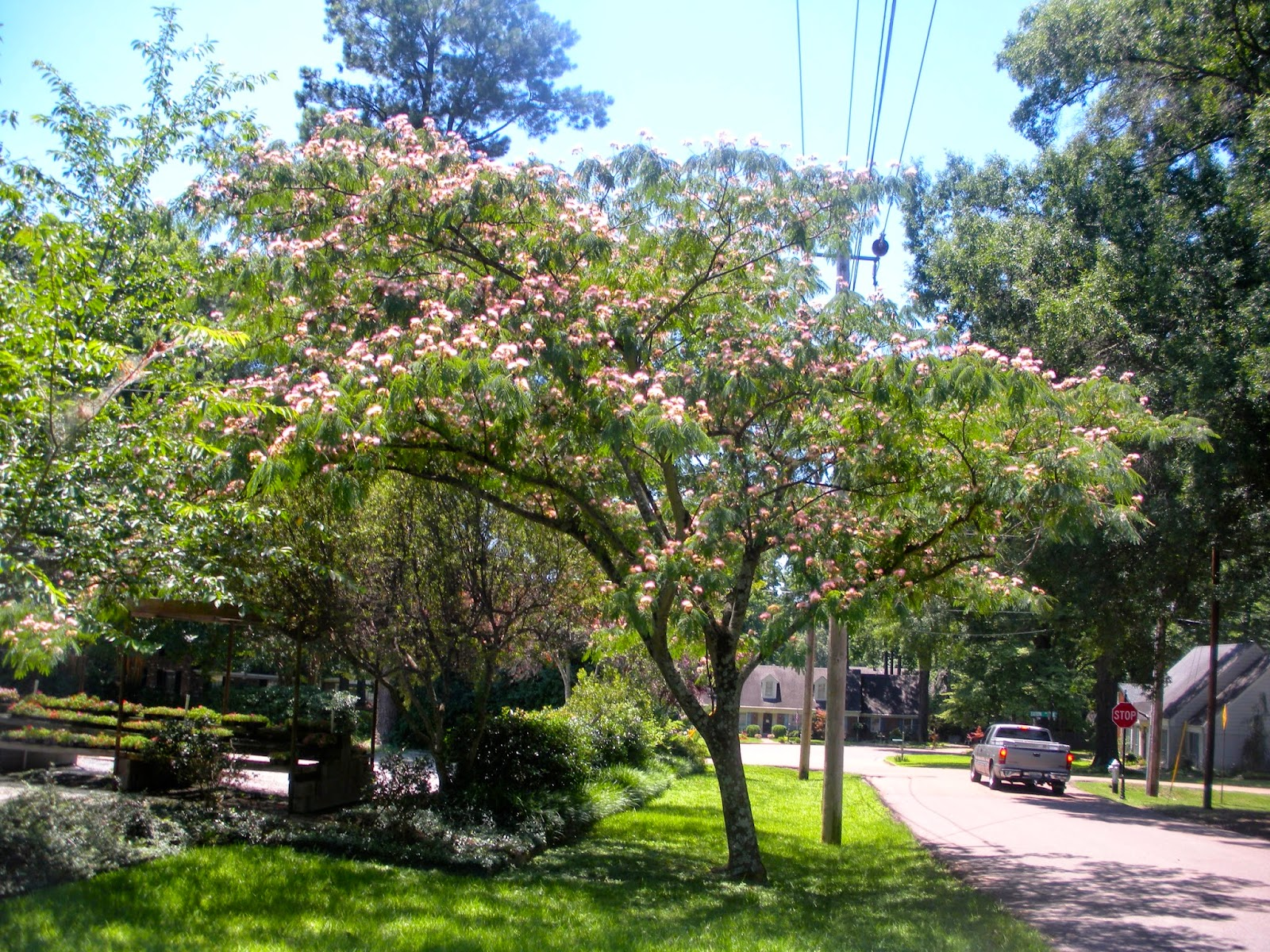 Memphis trees june 2014 for Garden trees memphis