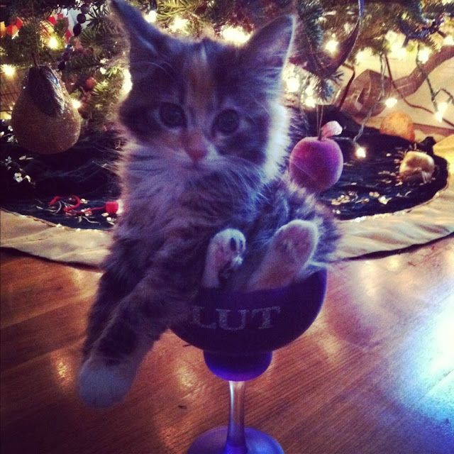 funny cat pictures, kitten in cup