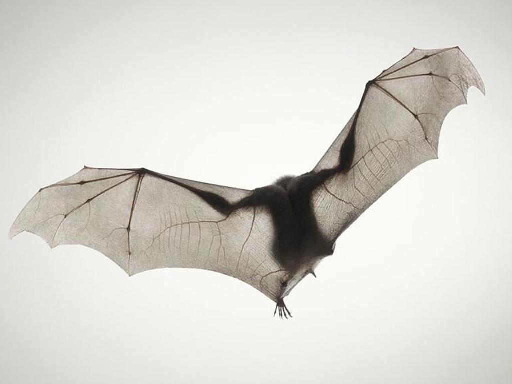 El aleteo de un murciélago