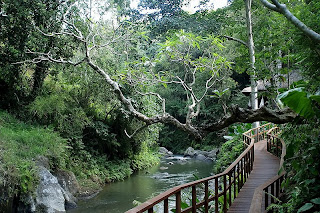ubud bali,indonesia nature,bali ubud,natural