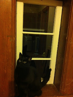 restored wood window and black cat