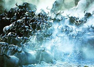 Миграция бизонов
