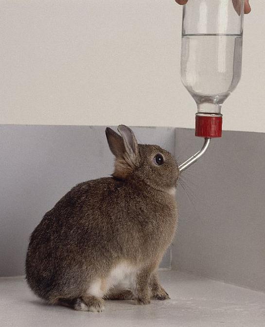 Блог о кроликах: Оборудование и инвентарь
