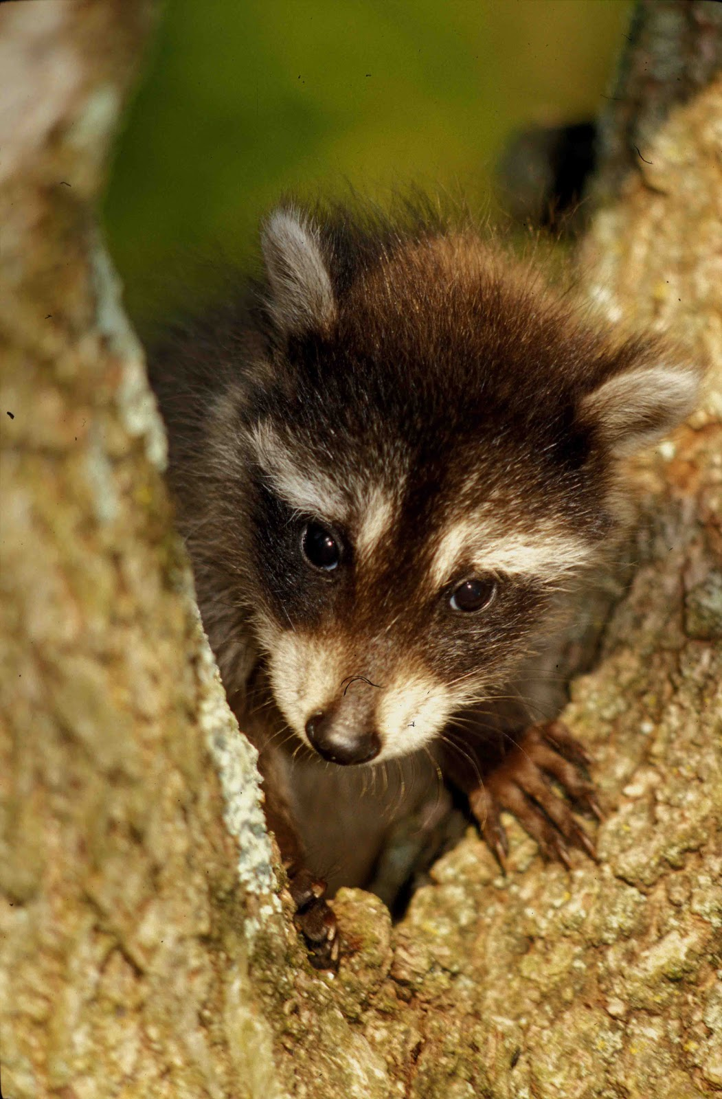 Kentucky Native Plant and Wildlife: There is something wrong in the ...