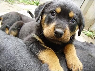 ... de reojo (véase el cachorrito de la segunda imagen) en un perro suele
