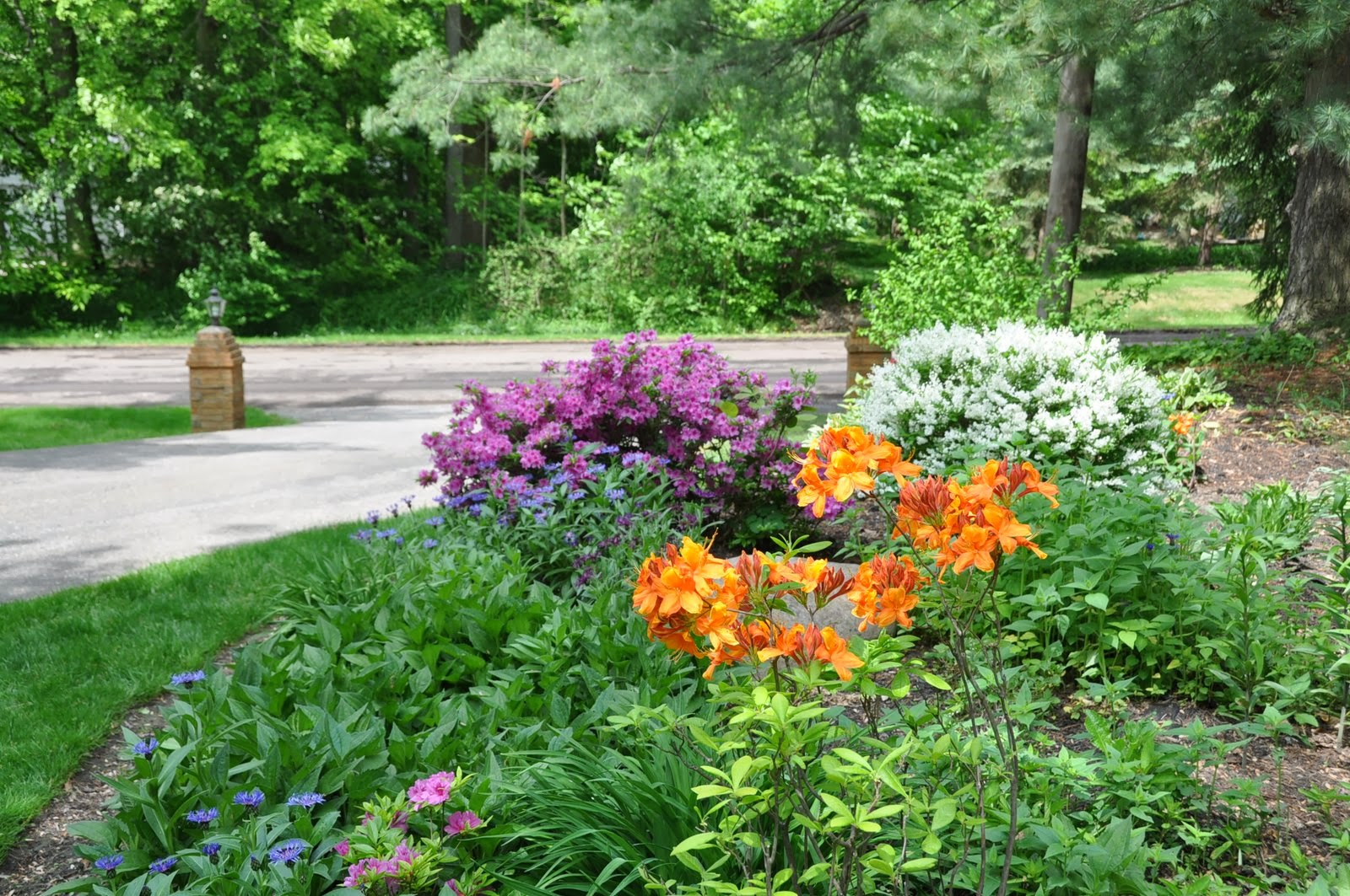 Flower Combinations For Flower Beds Flower Combination 4