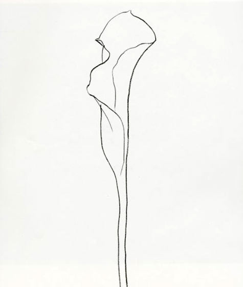 Contour Line Drawing Plant : Always be an emerging artist ellsworth kelly plant