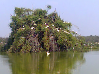 Vedanthangal Sanctuary Birds