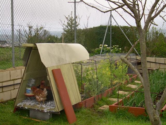 Como hacer un gallinero de madera casero taringa for Como hacer un techo economico