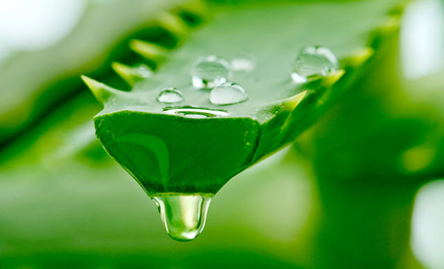 Aloe vera is a natural cure acne