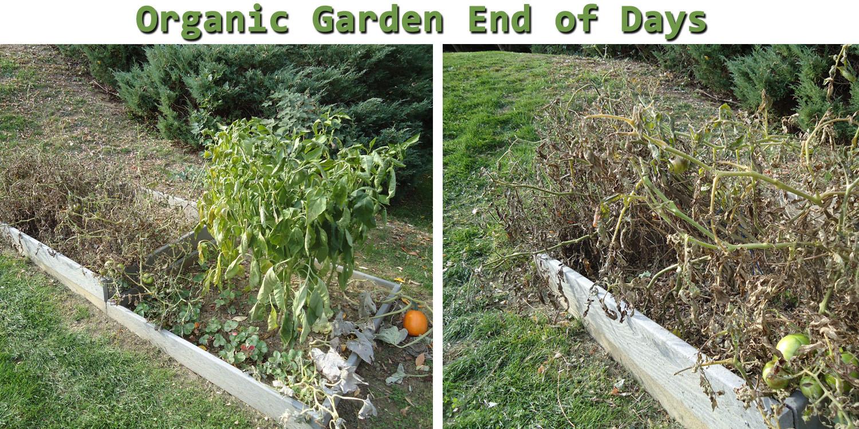 dead organic garden