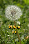 Check out these amazing Dandelion Videos By Neil Bromhall