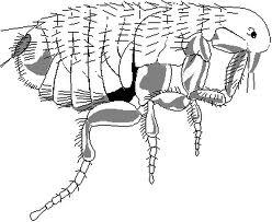 kutu parasit, parasit itu, manusia parasit
