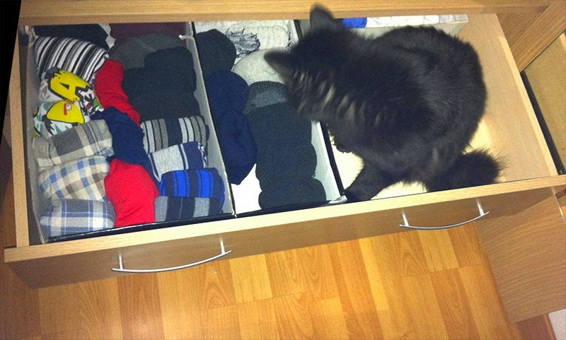 cajon ropa interior organizada 1