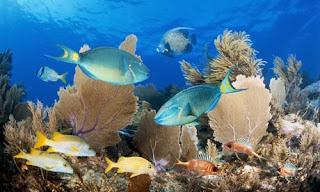 Materi Komponen Ekosistem dan Perannya - Biologi SMA Kelas 10