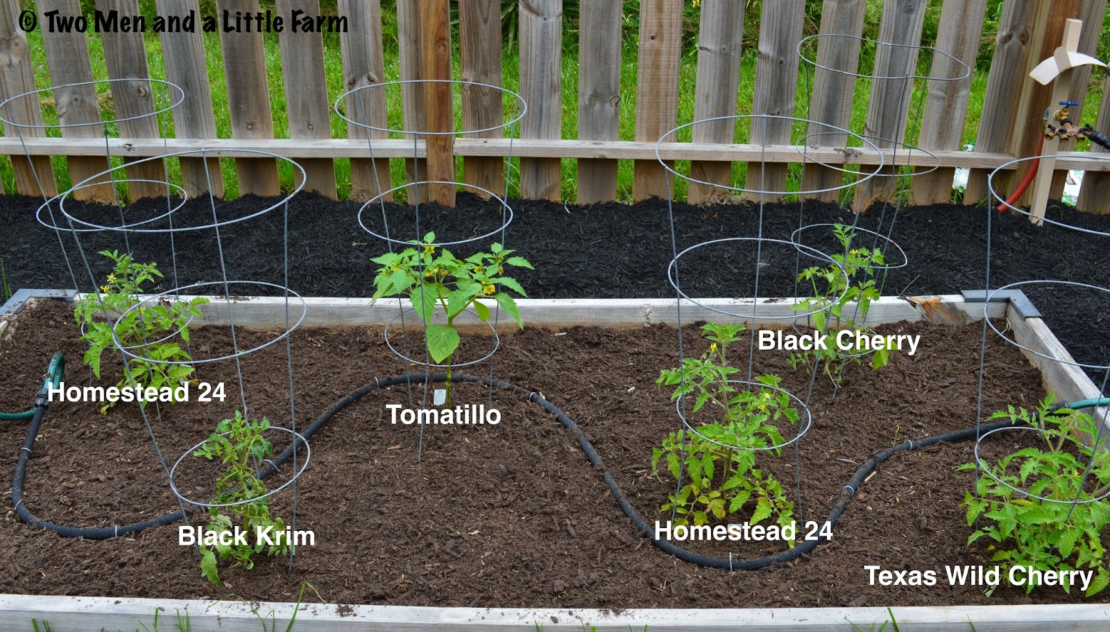 Two Men and a Little Farm: TOMATO BED AND SQUASH BED