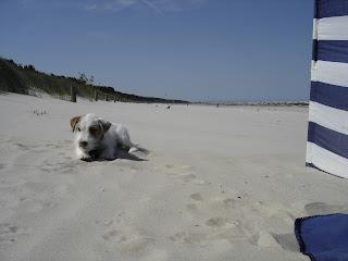Urlaub mit dem Hund Hundehotel Urlaubsangebote für Hundebesitzer