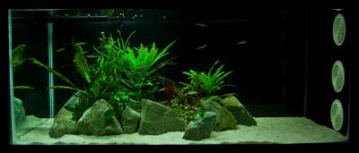 low tech aquarium