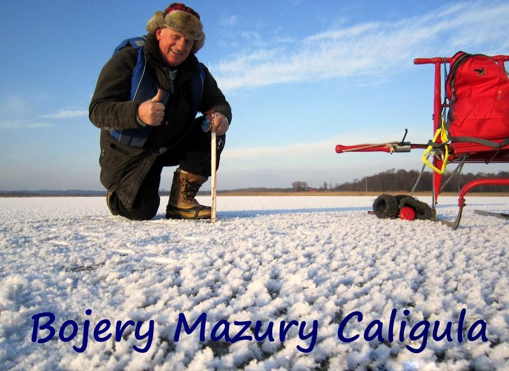 Bojery Mazury Caligula