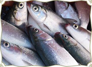 Kenapa Ikan Bau Amis