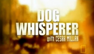 Watch Dog Whisperer