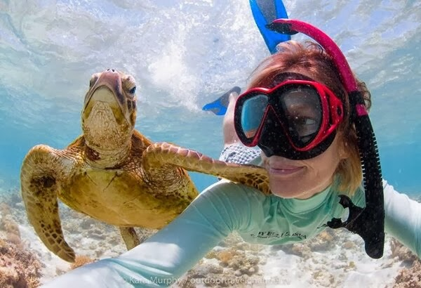 Funny animals of the week - 7 March 2014 (40 pics), turtle takes picture with diver