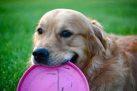 Dog-Behavior-Tips