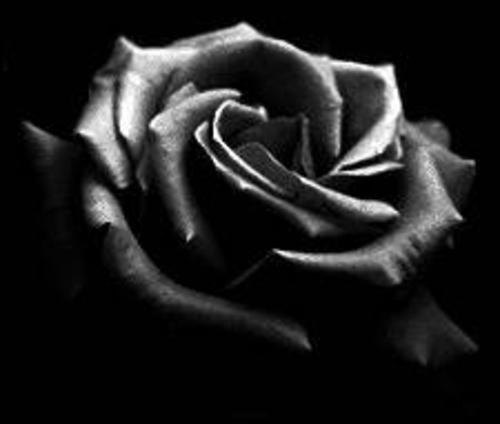 letra de la negra flor: