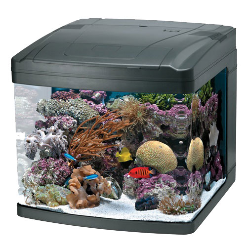 Truvu Aquariums Blog Truvu Aquariums