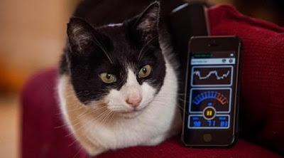 9 Fakta mengejutkan mengenai dengkurang kucing