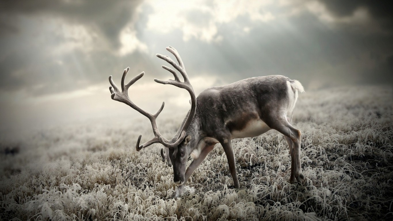Reindeer Antlers HD Wallpaper, Reindeer HD Wallpaper, Deer ... Reindeer Antlers Headband
