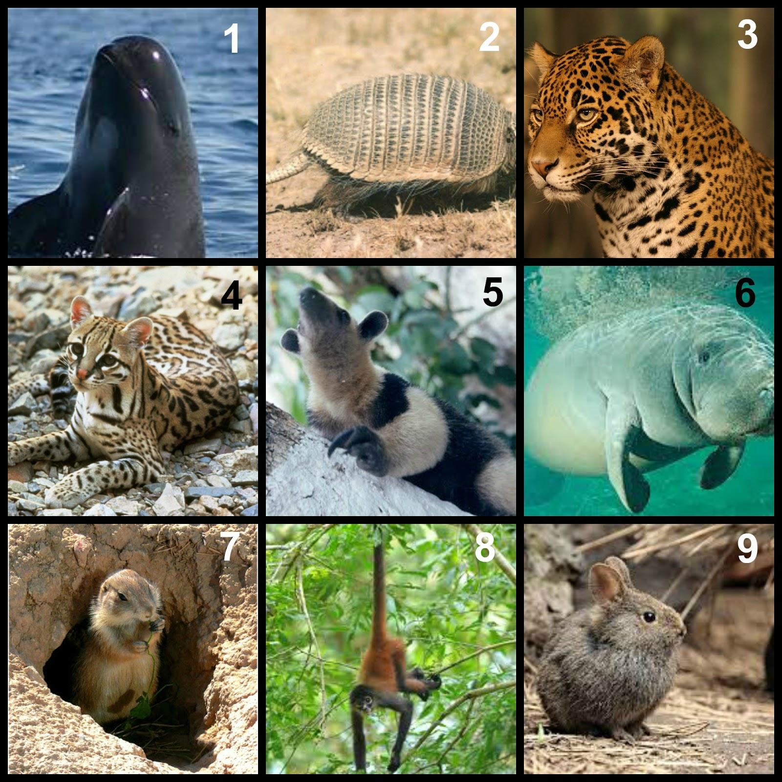 Animales en peligro de Extincion - YouTube