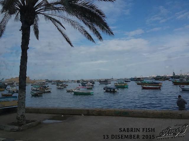 Winter Escapade | Alexandria
