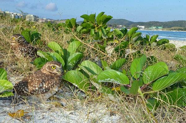 Na orla da Praia do Forte, em Cabo Frio