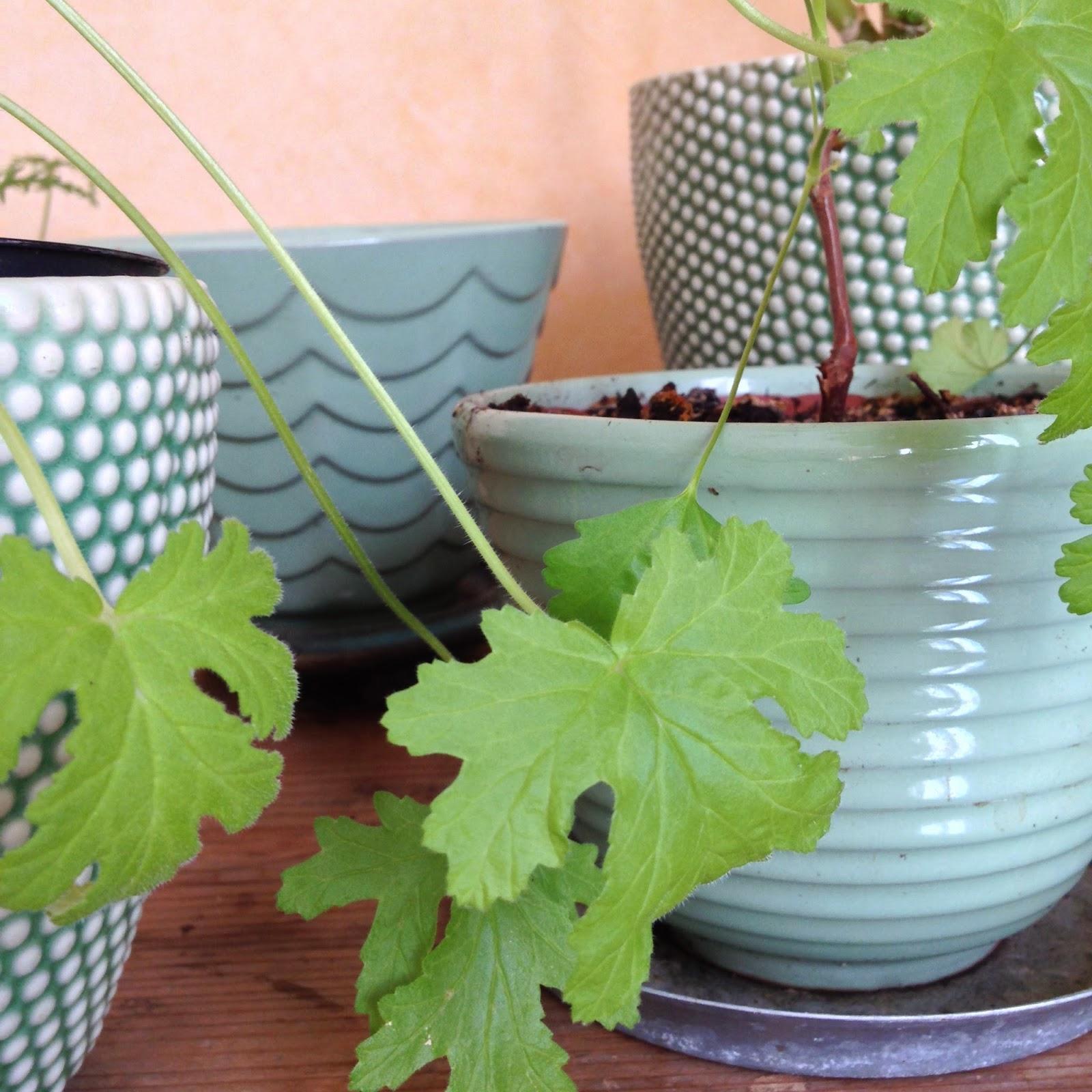 Have a Garden Day: JANUAR, Indretning