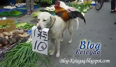 Anjing jual ayam di China